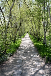 The Birch Tree Allee leading to the Tea Houses