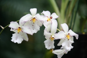 TG13_White Orchids