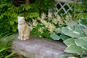 FCBlog_Garden Cat